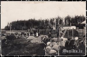 Biešu nokraušana Ječu stacijā pirms transportēšanas uz Liepāju 1935. gadā.